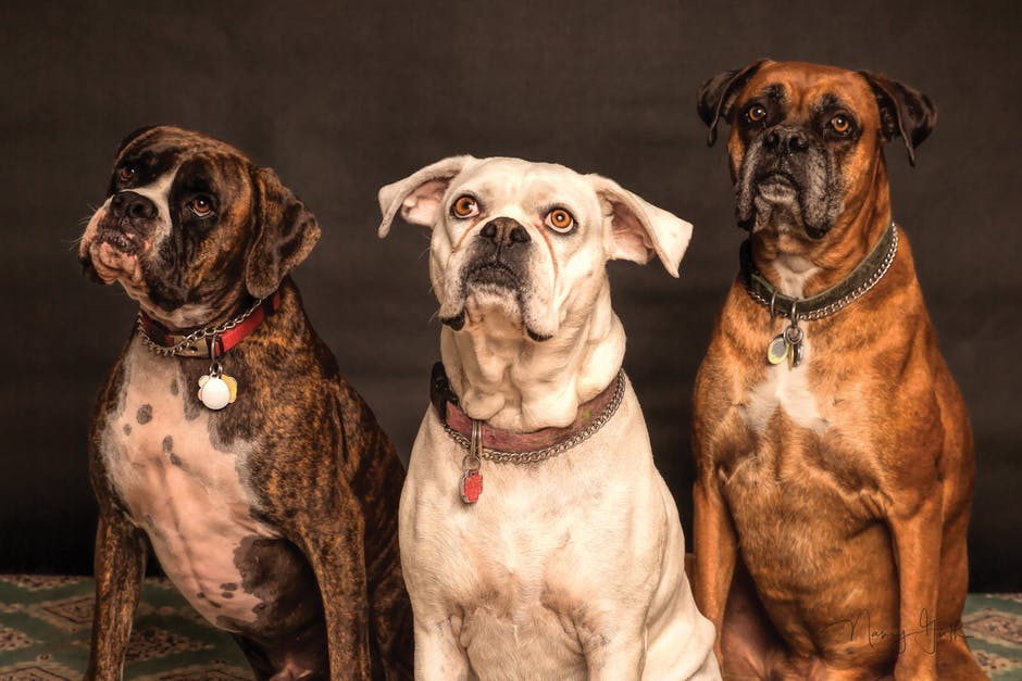 wygodne psie obroże